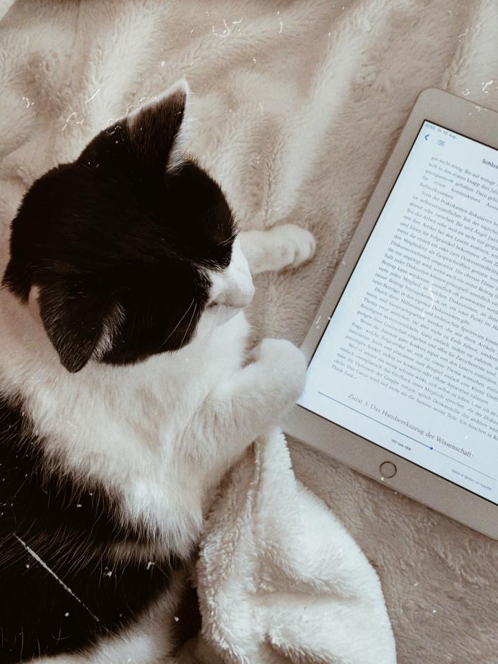 Wie kann ich mich zum Lesenmotivieren?